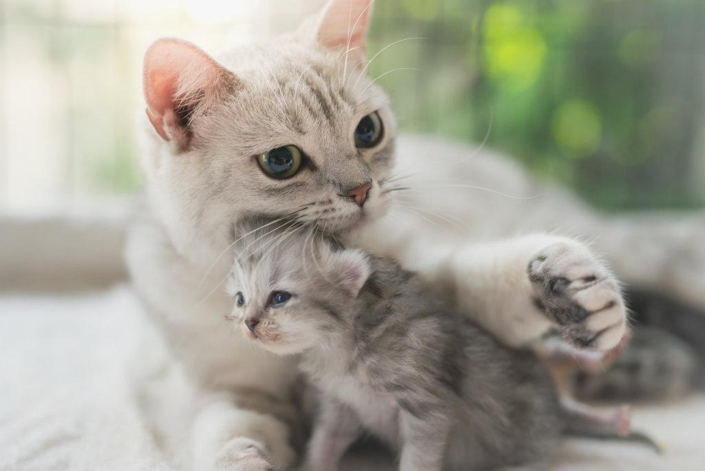 kat ontwormen kitten
