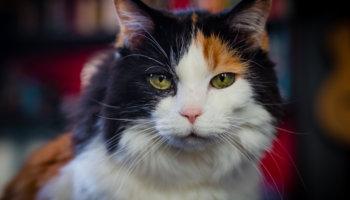kat ontwormen: kuur, besmetting