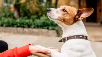 Een hond lenen - alleen als je ervaring hebt
