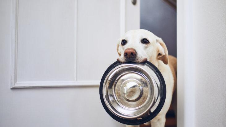 Goede voeding voor de hond