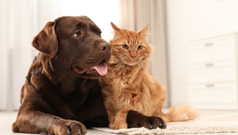 Is je huisdier net als jij verzekerd?