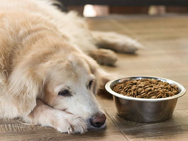 voeding voor de oude hond