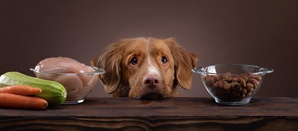 voeding voor de hond hond BARF