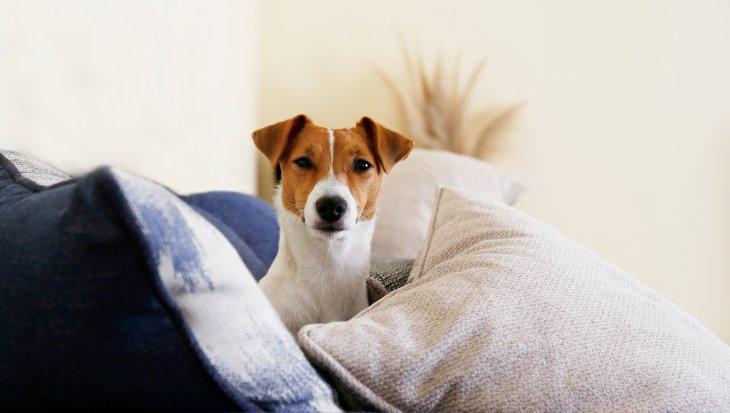 Hond in de puberteit: dit kun je verwachten