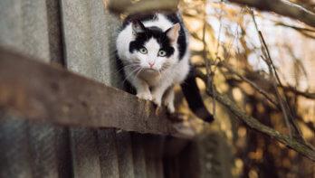 Proef met kattentrappetjes
