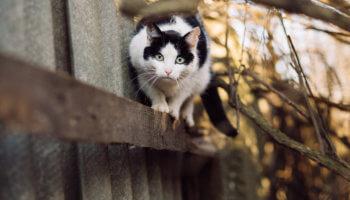 Kat in het water trap