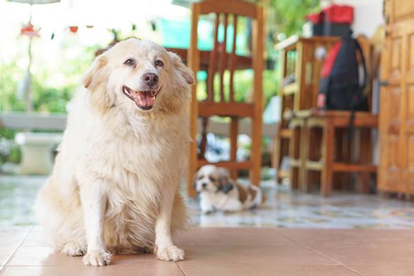 voeding voor de hond overgewicht