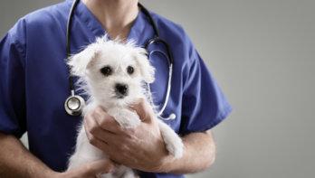 Euthanasie huisdier doordat mensen dierenartskosten niet kunnen betalen