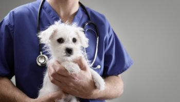 euthanasie dieren