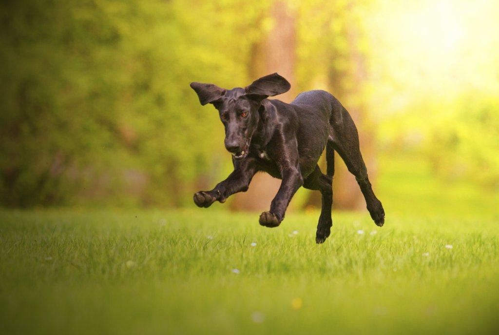 Pubertijd hond geslacht loopsheid