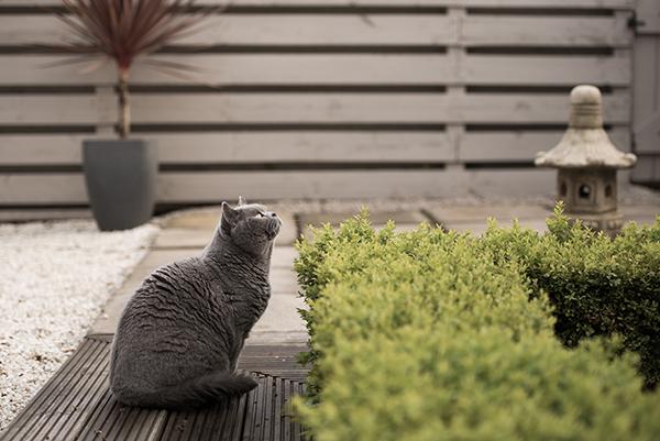 kat in de tuin