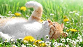 kat veilig in de tuin