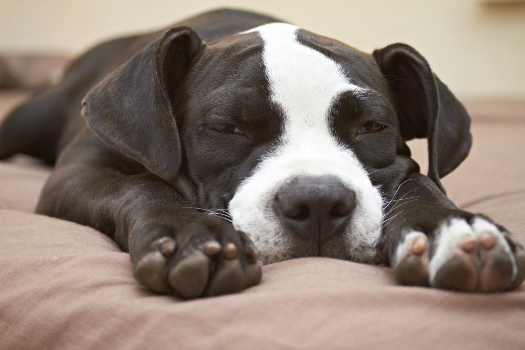 hond stinkt uit bek