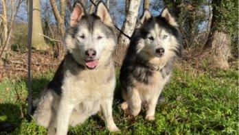 Verhuisduo van de week: Jessy en Snowy