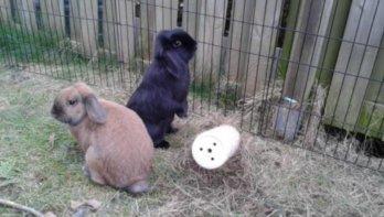Verhuisdieren van de week: Hans en Grietje