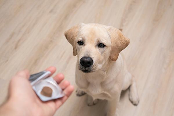 hond ontwormen