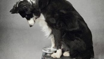 Je hond slank houden na castratie