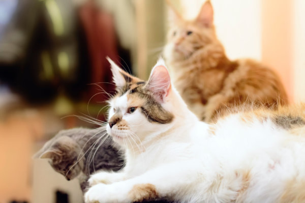niesziekte grote groep katten