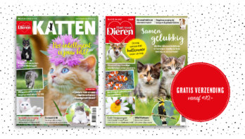 Jouw favoriete magazine thuisbezorgd