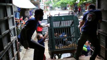VIER VOETERS redt twee voormalige galberen in Vietnam