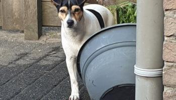 verhuisdier asiel hond