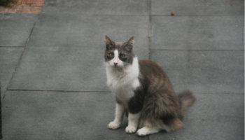 verhuisdier kat asiel