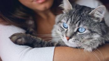 Kun je besparen als je een huisdier hebt?