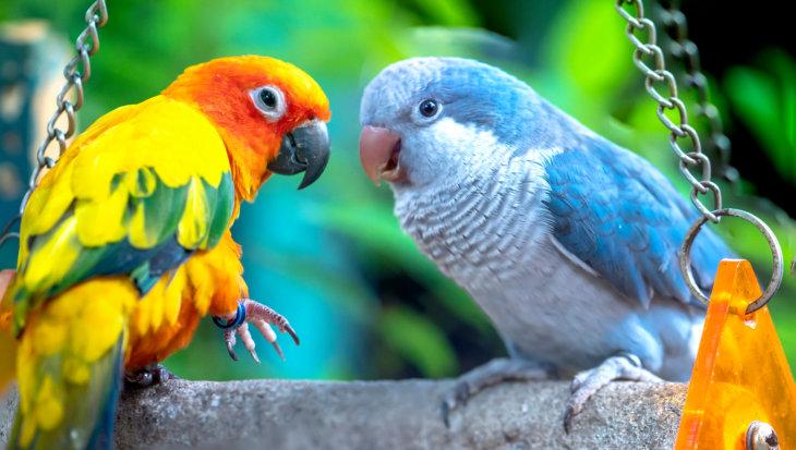 Woordenboek vogeltaal