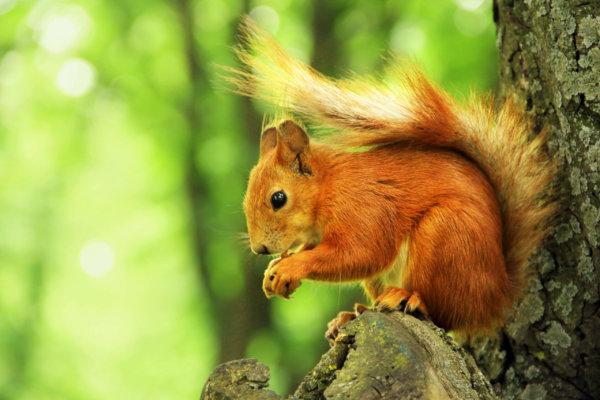eekhoorns leven eten
