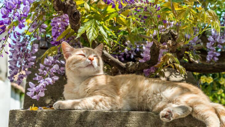 Tips voor een leuke kattenhoek in de tuin