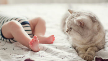 Tips voor jaloerse katten bij gezinsuitbreiding