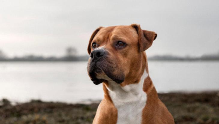 Verhuisdier van de week: Tyson