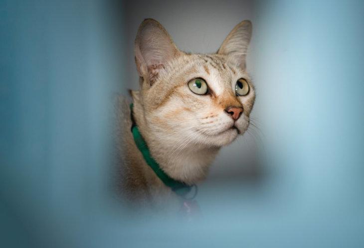 veel voorkomende ziekten bij kat: artrose