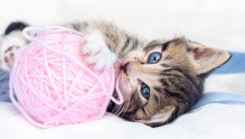Draad en naald meest gevonden voorwerp in kattenmaag