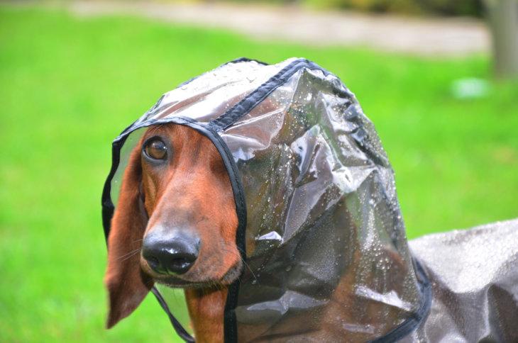 hond regen naar buiten