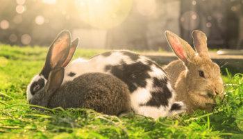 konijnen en hitte