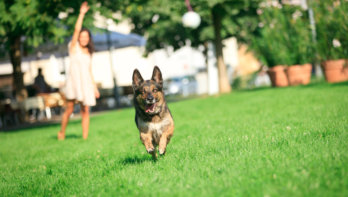 Dummytraining voor honden