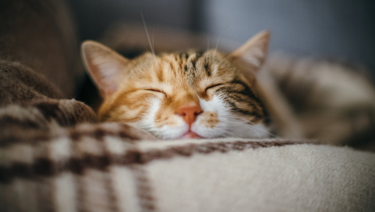 Veel voorkomende ziektes bij katten