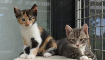 geboortegolf kittens asiel