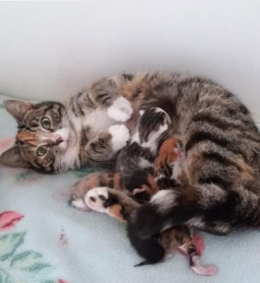 geboortegolf zwerfkatten aisle zierikzee
