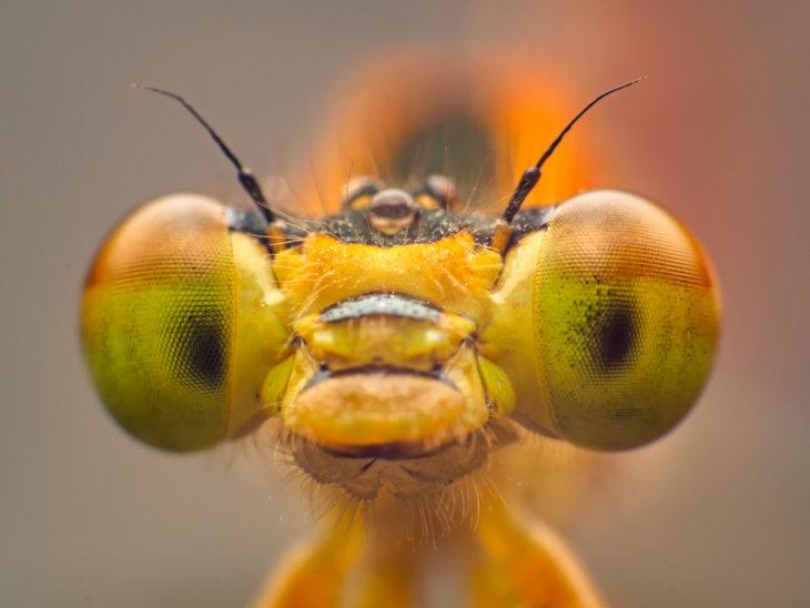 libelle tegen muggen in je tuin