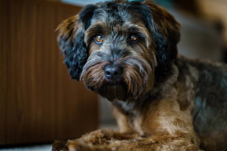 leishmania hond weerstand ondersteunen