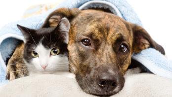 Kanker bij honden en katten