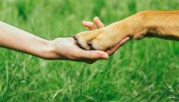 doa en oopoeh helpen hondenbaasjes