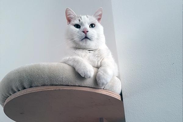 Verhuisdier van de week: Coco