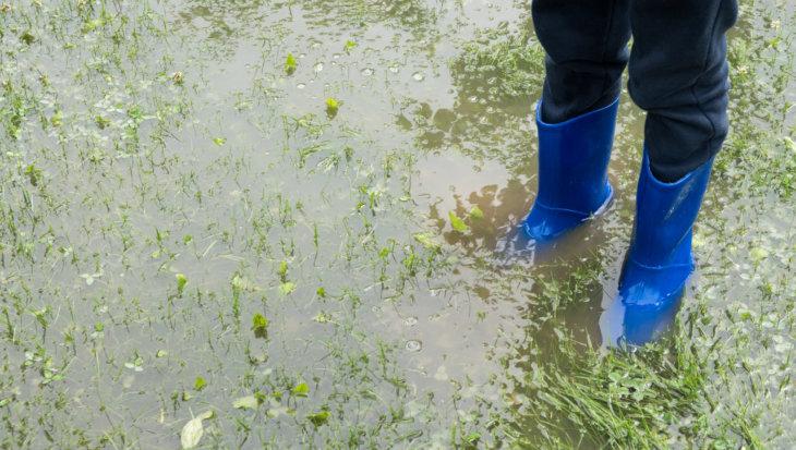 Na overstroming voorzichtig omgaan met gevonden dierenlichamen