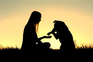 levenslessen eeuwige trouw hond