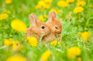 levenslessen konijn