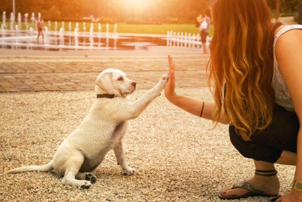 levenslessen puppy