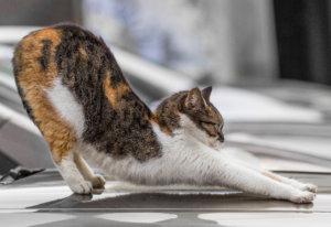 levenslessen beweging kat